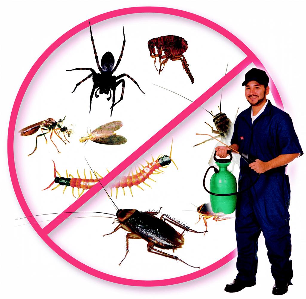 شركة مكافحة حشرات بأبها